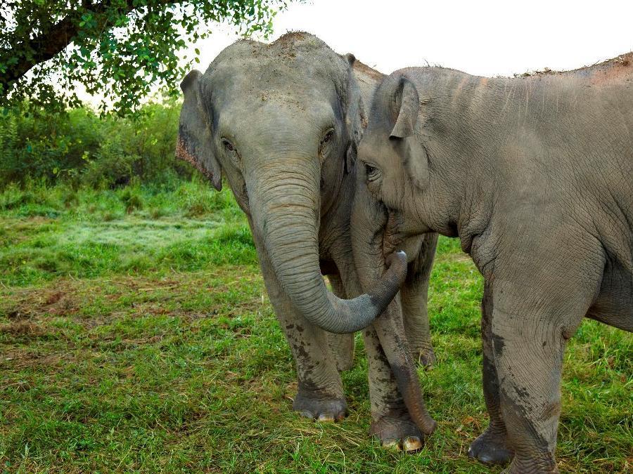 Anantara Golden Triangle Elephant Camp & Resort Chiang Saen