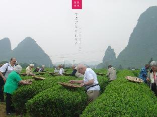 Aroma Tea House