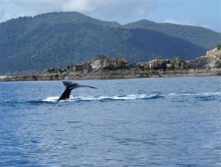 Airlie Beach Myaura Bed and Breakfast Whitsunday Islands - Whales