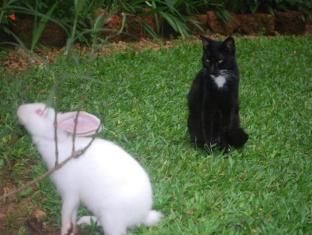 Highbury Colombo Colombo - Pets In The Garden