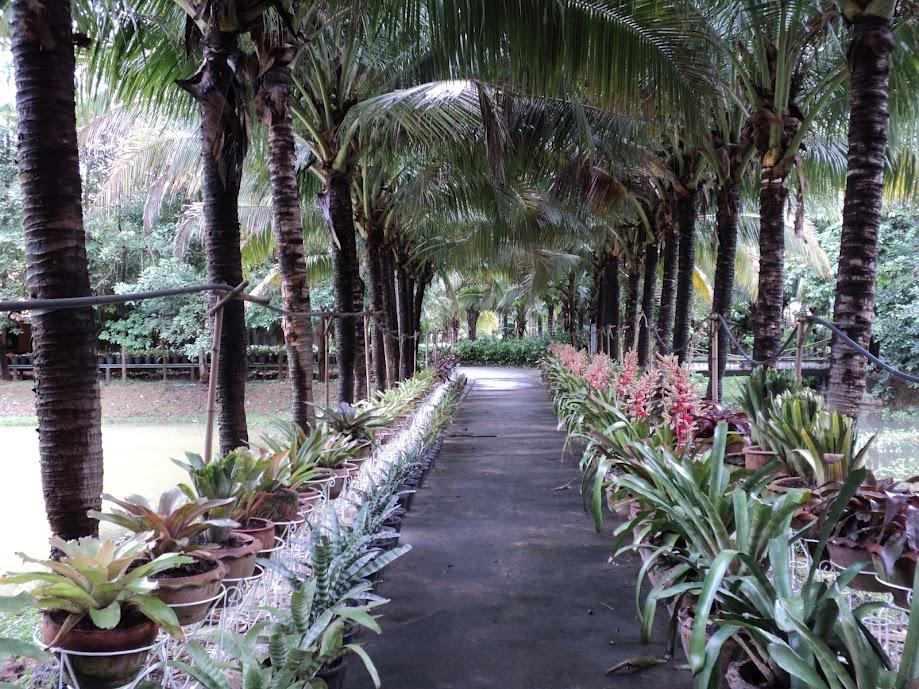 拉伊西銮度假村,ไร่สายหลวง รีสอร์ท