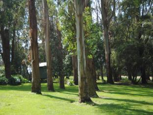 Clarendon Chalets Mount Gambier - The Gum Trees within the garden surrounds