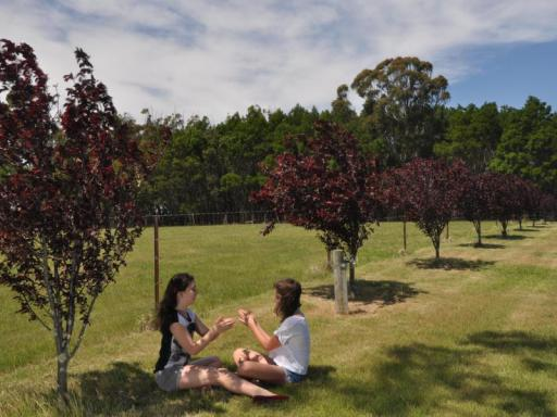 Best guest rating in Mittagong ➦ Bowral Road Bed and Breakfast takes PayPal