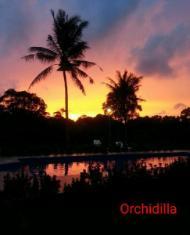 Orchidilla - Phuket