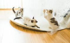 ANC apartment&cat, Chengdu