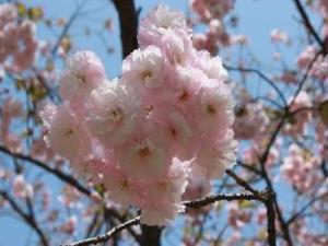 Karatsu Hot Spring Ryokan Wataya