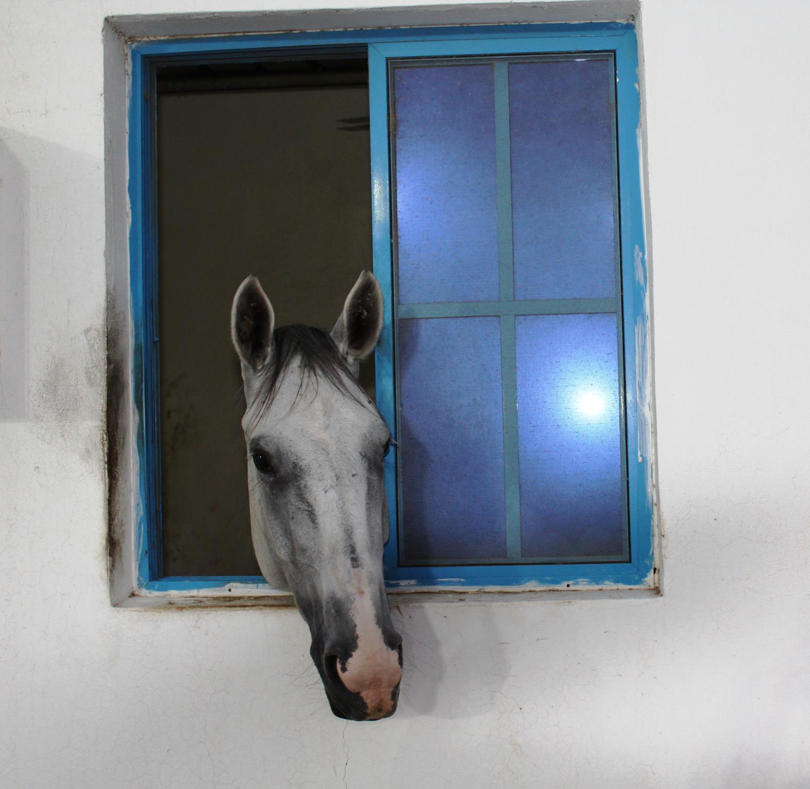 Creo Equestrian