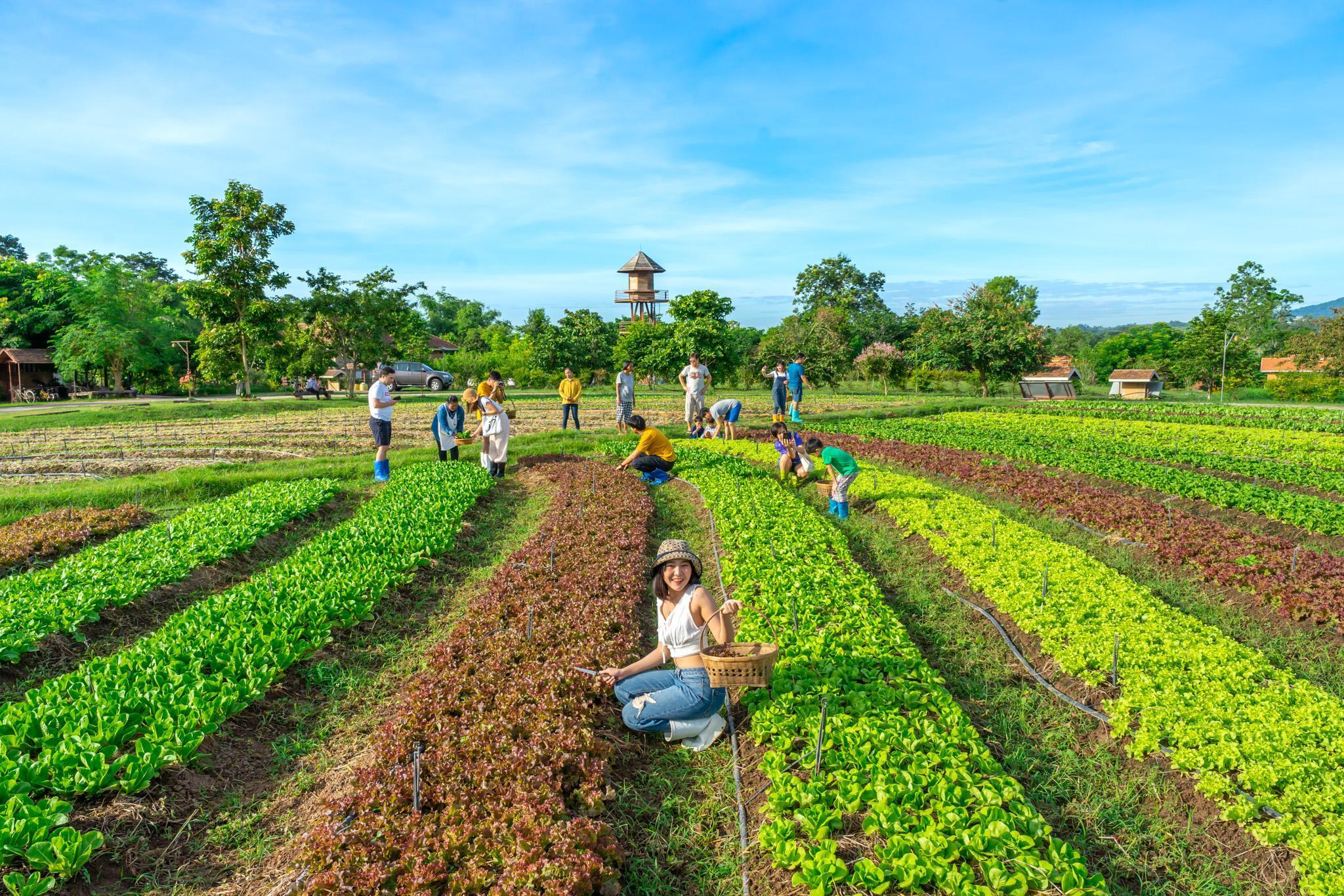 Organic Coolliving Farmhouse