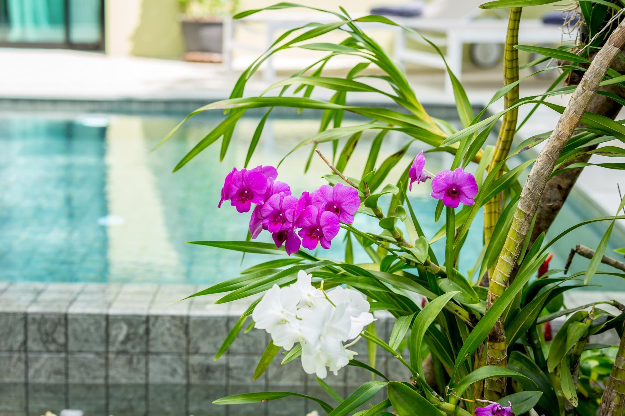 Review South Samui Serenity. Four Bedroom pool Villa