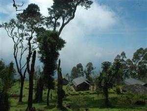 Nature Zone Jungle Resort