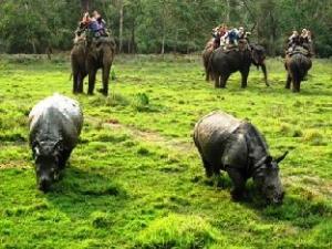 Wildlife Adventure Resort