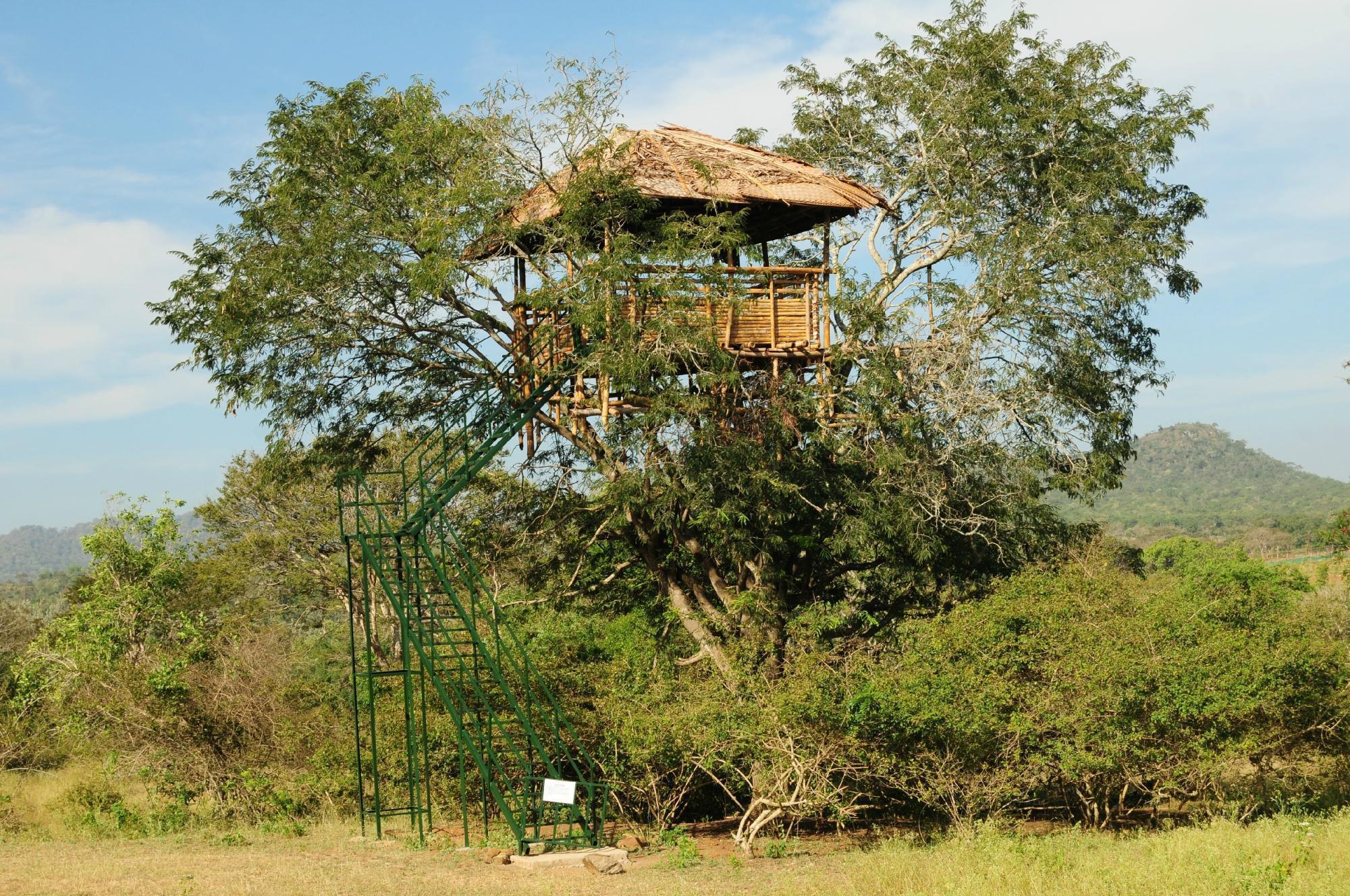 Bamboo Banks Farm And Guest House   Masinagudi