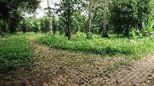 Vuon Thu Guesthouse Garden
