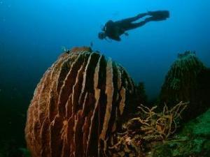 Anilao Scuba Dive Center Resort
