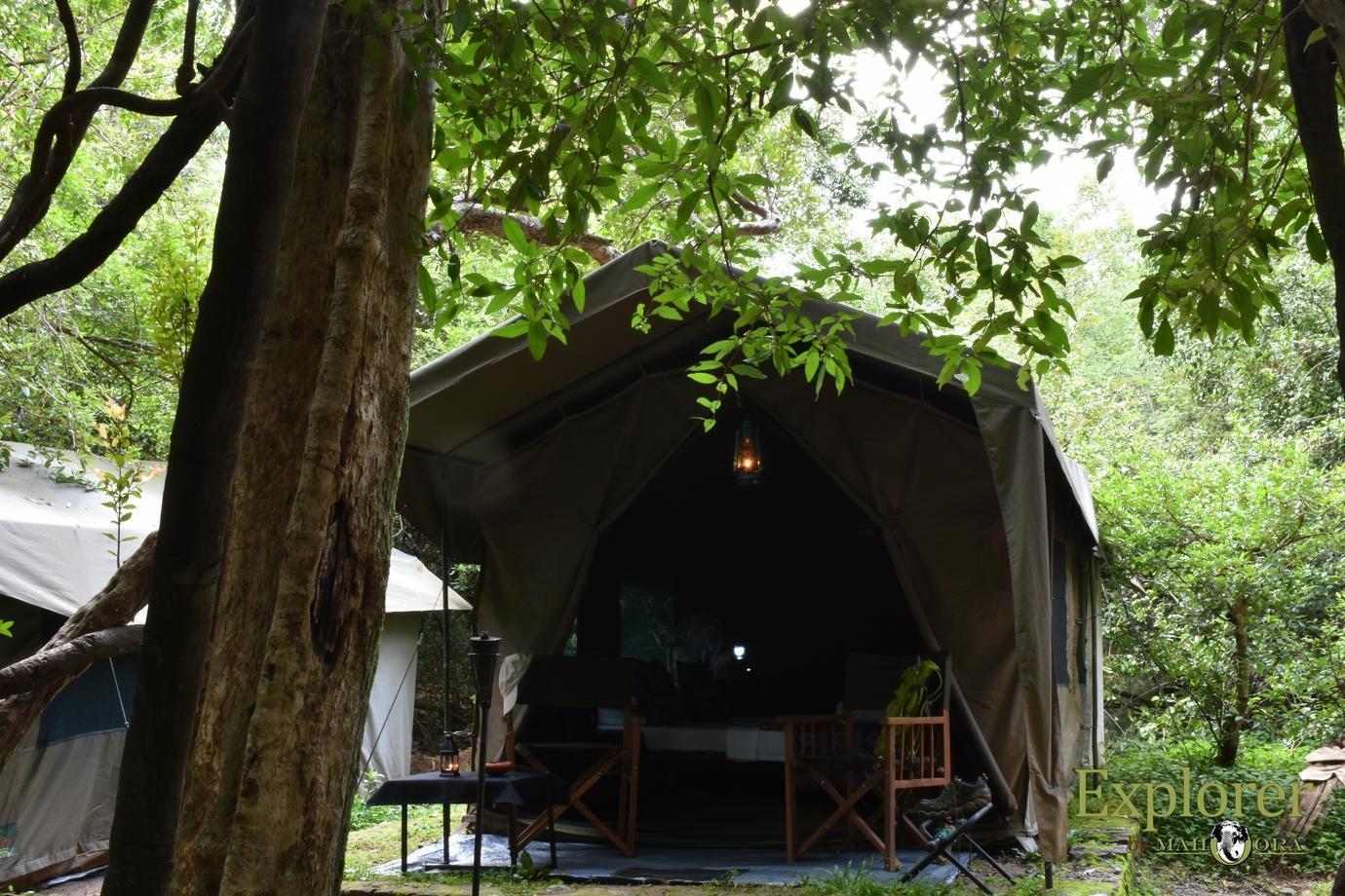 Mahoora Tented Safari Camp   Wasgamuwa