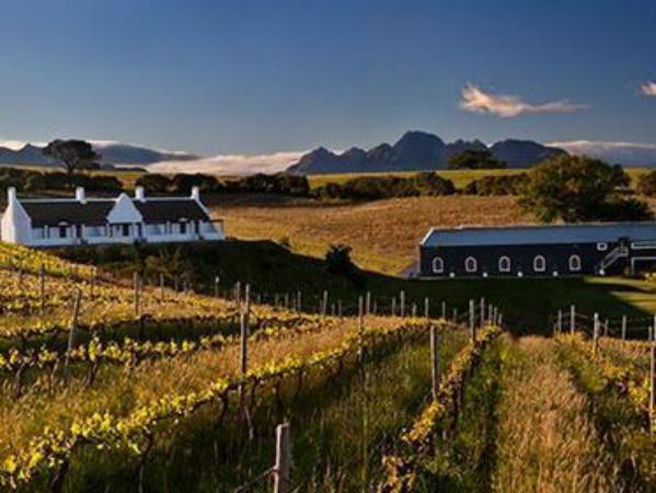 Aaldering Vineyards and Wines Luxury Lodges Stellenbosch