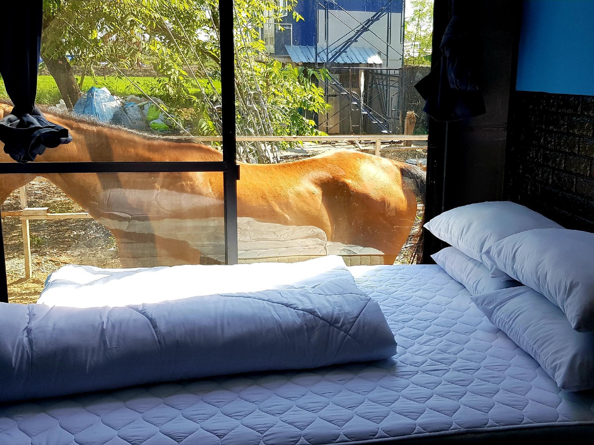 RODEO HOUSE BKK Exclusive Queen BED DMK Airport อพาร์ตเมนต์ 1 ห้องนอน 1 ห้องน้ำส่วนตัว ขนาด 18 ตร.ม. – สนามบินนานาชาติดอนเมือง