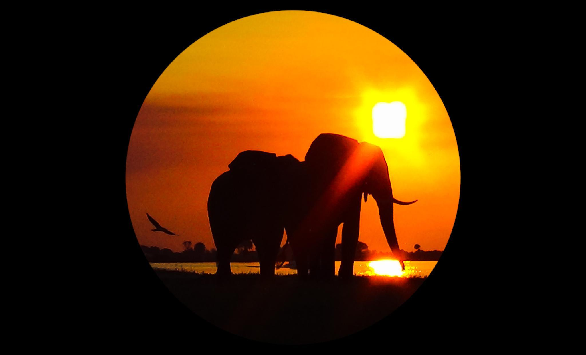 Elephant Trail Guesthouse And Backpackers