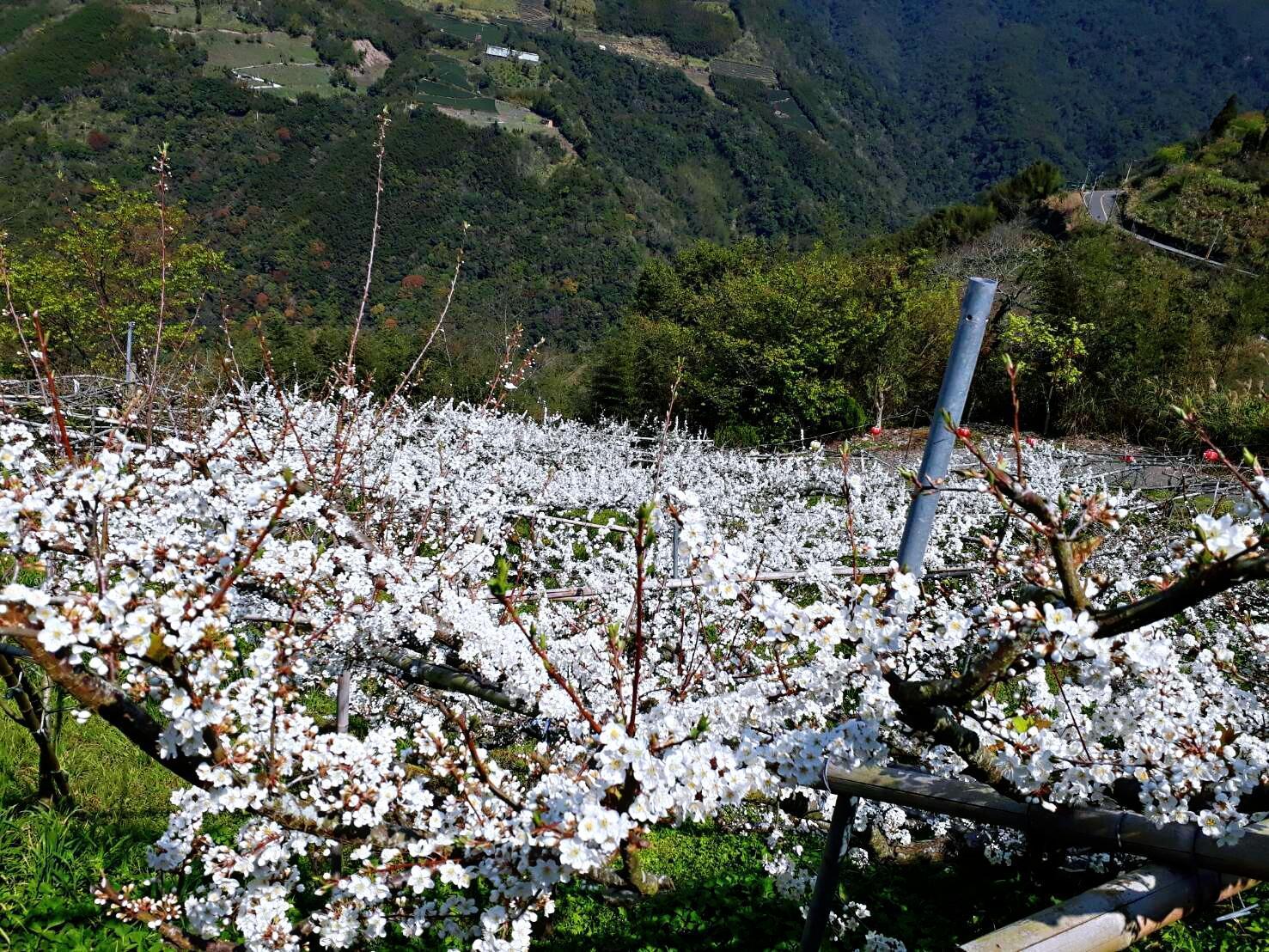 Lala Shan Gaoyuan Farm