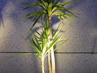 Cocotree Homestay 4