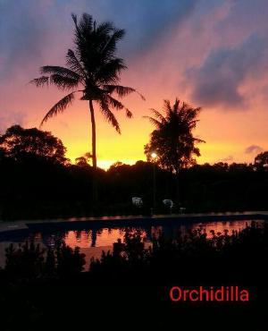 오키딜라  (Orchidilla)
