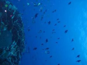 Hoga Dive Resort
