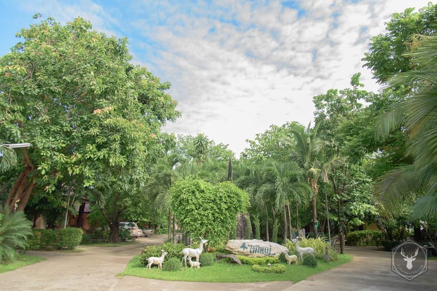 Maiyai Resort   Big Tree