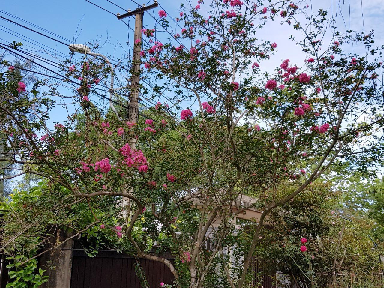 Rose Villa Beach